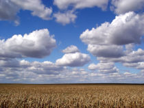 Clouds n corn.jpg